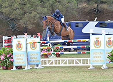 Cavallo belga baio del 2008 (cav.163)