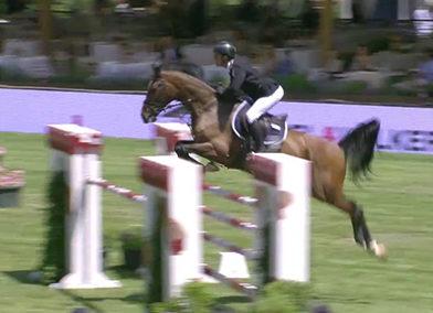 Cavallo tedesco baio del 2011 (cav.164)
