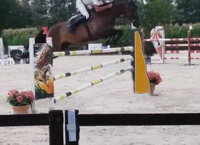 Cavallo tedesco baio del 2010 (cav.166)