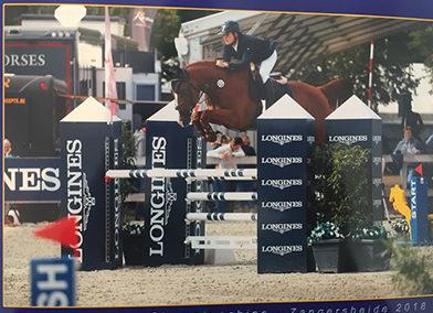 Cavallo italiano sauro del 2013 (cav.168)