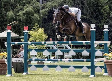 Cavallo belga baio del 2006 (cav.172)