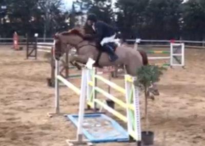 Cavallo francese sauro del 2011 (cav.159)