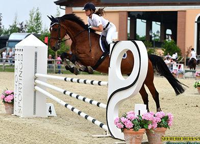 Cavallo olandese baio del 2007 (cav.162)