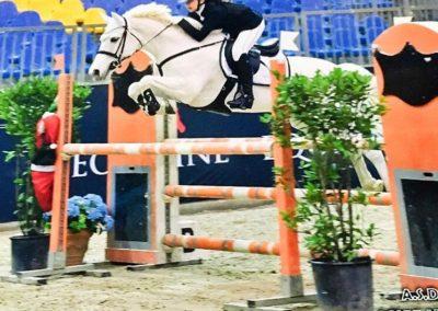 pony grigio irlandese del 2006 (cav.184)
