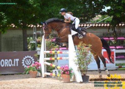cavallo italiano baio del 2005 (cav.178)