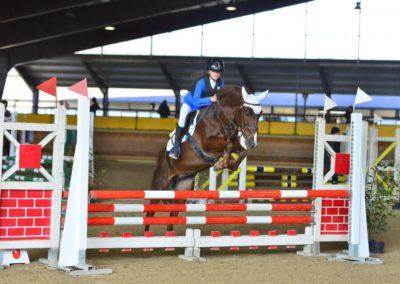 pony sauro belga del 2012 (cav.188)