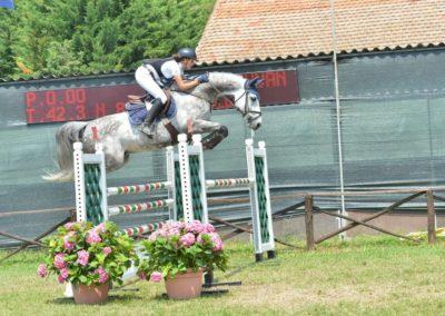 cavallo grigio belga del 2008 (cav.197)