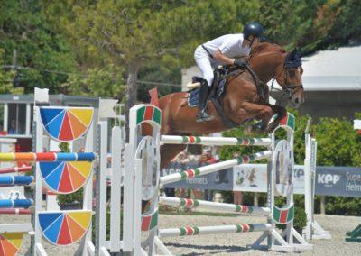 cavallo sauro belga del 2008 (cav.199)