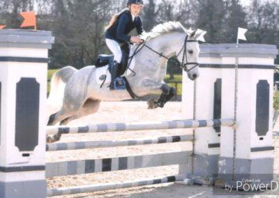 pony castrone grigio del 2007 (cav.208)