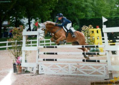 pony castrone sauro olandese del 2005 (cav.213)