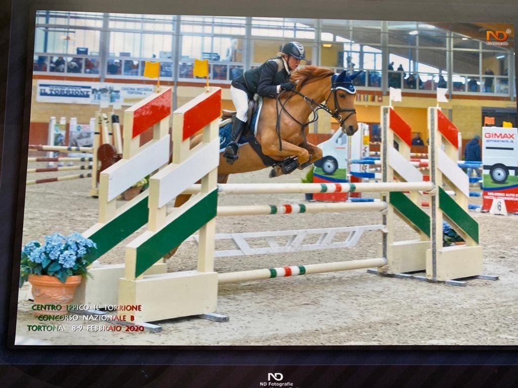 Cavallo in vendita femmina baia italiana del 2011