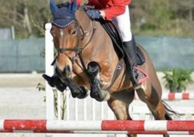 Pony castrone baio italiano del 2012 (cav.237)