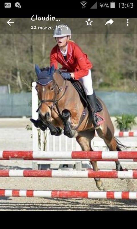 Pony castrone baio italiano del 2012