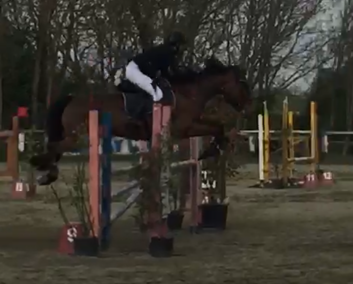 Pony baia irlandese del 2010 (cav.243)