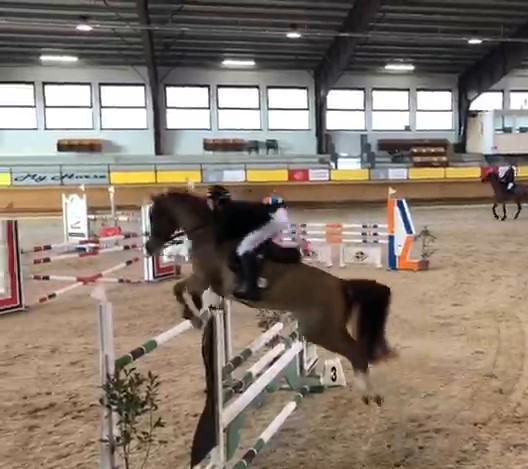 Cavallo castrone sauro tedesco in vendita