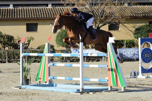 Cavallo in vendita femmina saura polacca da salto ostacoli