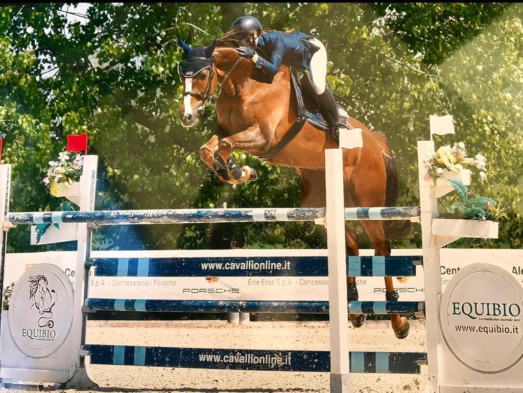 Cavallo in vendita femmina Baia Oldenburg del 2011