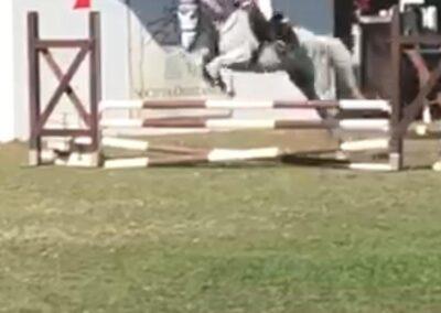 Pony Italiana del 2007 ( Cav.279)