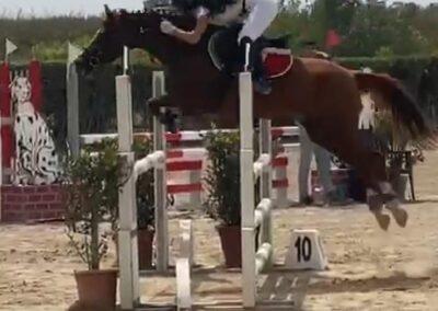 Pony italiana saura del 2004 ( Cav,284)