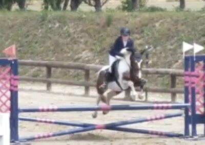 Pony Pezzata italiana del 2016 ( Cav. 332)