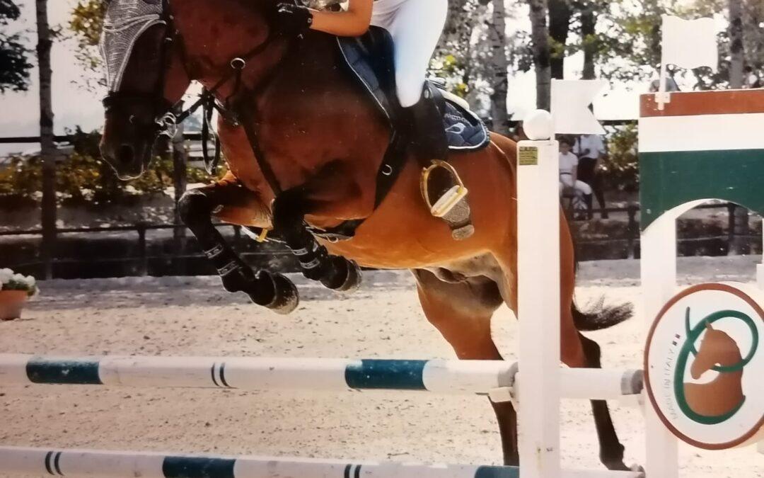 Pony baio Italiano del 2011 ( Cav. 358 )